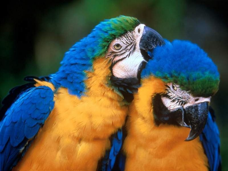Aves_Exoticas_08